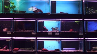 Les aquariums