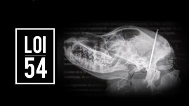 Radiographie du crâne d'un animal