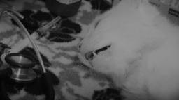 Chat décédé par euthanasie