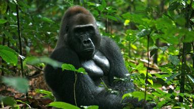 National Geographic - Destination sauvage : Congo