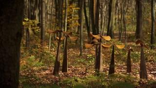 Mouvement Essarts : sculptures en nature