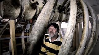 Dans le ventre d'une baleine : Claude Bourque, sculpteur d'os et dinandier