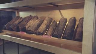 Terre riche d'une histoire forte - Musée d'archéologie de Roussillon