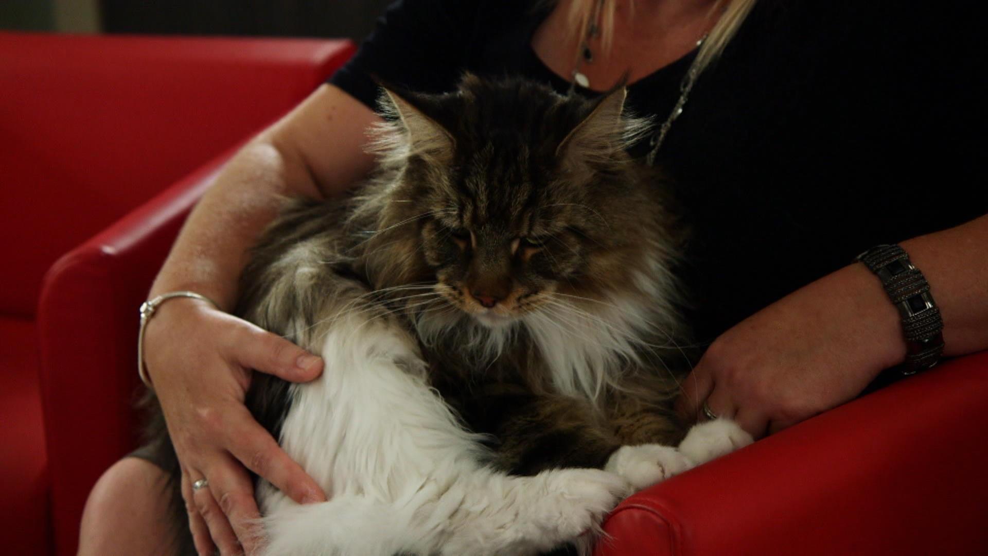 chat rencontre quebec 100 gratuit Vaulx-en-Velin