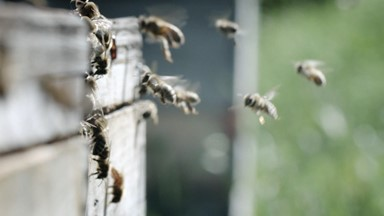 Des ruches, du miel… et le désir de changer le monde, une abeille à la fois!