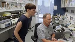 Le poisson-zèbre pour trouver un médicament pour les personnes souffrant de la sclérose latérale amyotrophique, SLA