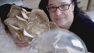 Annie Thibault et la vie mystérieuse des champignons