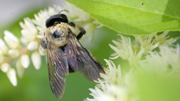 Comment le déclin des abeilles menace-t-il notre alimentation?