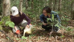 Des vers de terre nuisibles pour nos forêts;