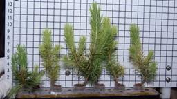 Les plantes peuvent-elles vraiment absorber les polluants intérieurs?