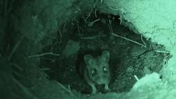 Freiner la maladie de Lyme en traitant les souris