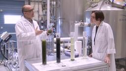Lutter contre l'effet de serre grâce à des algues qui dévorent le CO2 produit par les usines