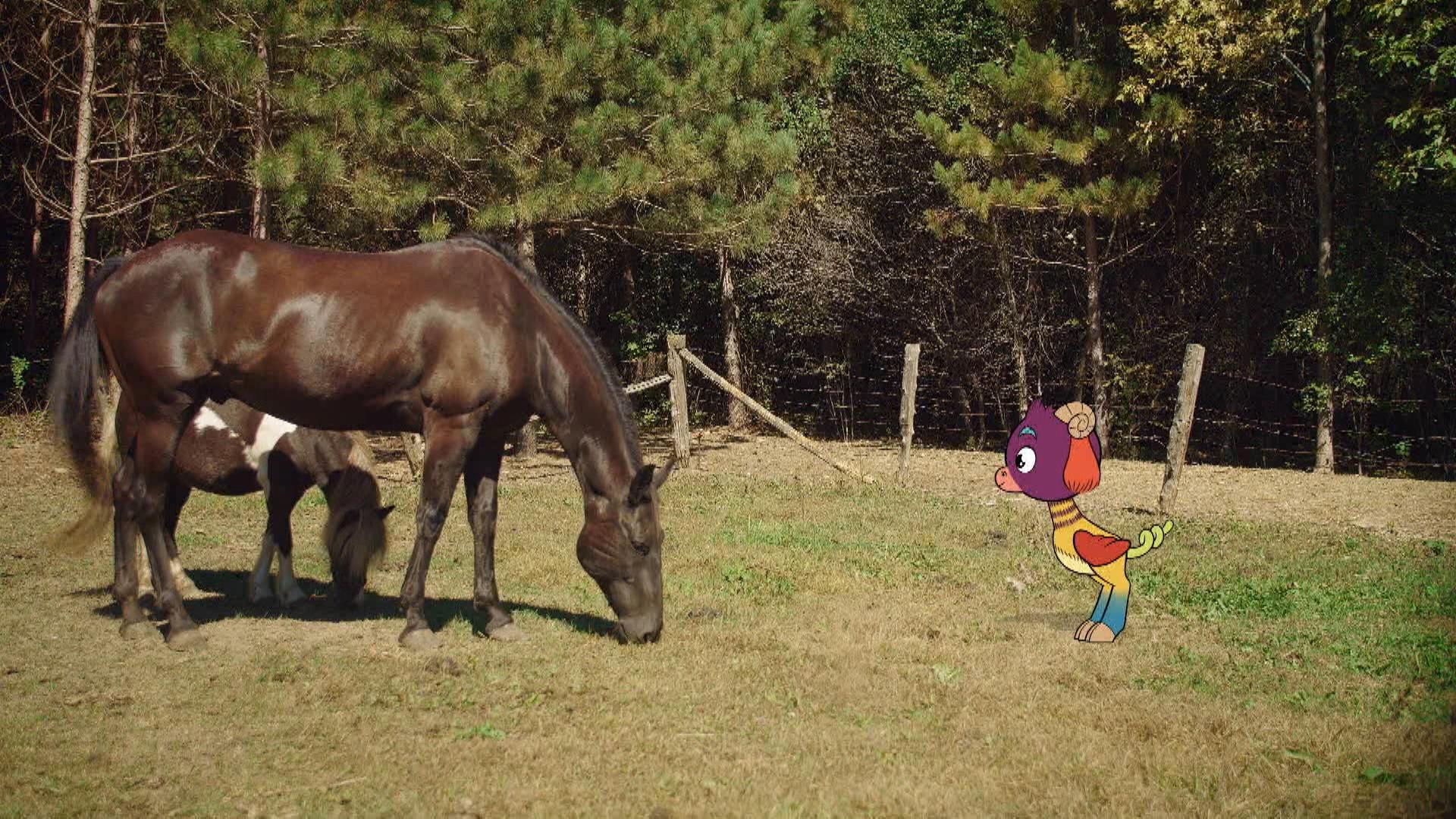 Un cheval | Passe-Partout | Zone Vidéo Télé-Québec