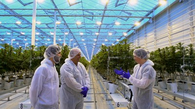 Une serre remplie de tomates désormais remplie de marijuana